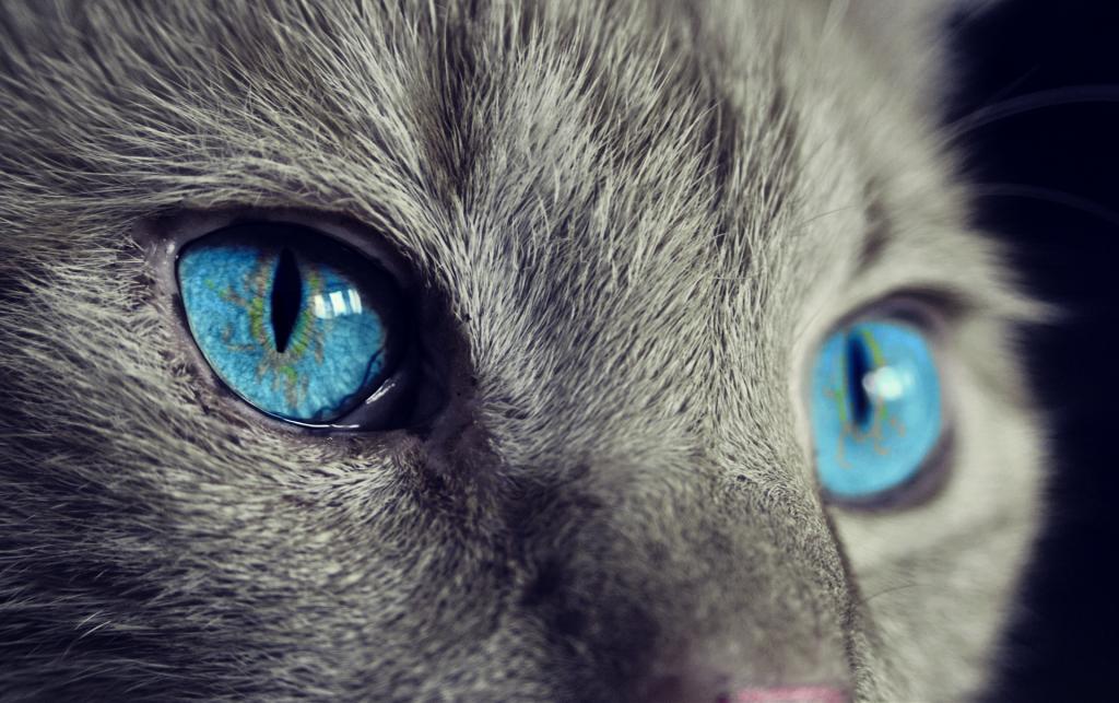 Stressfreier Umzug für Katzen auf netzperlentaucher.de